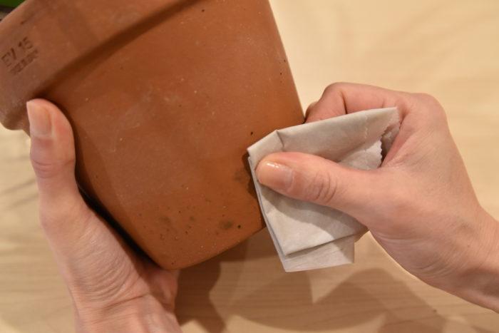 鉢にカビや藻が発生している場合は、濡らしたティッシュやスポンジなどで汚れを落としてください。  特に素焼き鉢の場合はカビが発生しやすいため注意が必要です。  次亜塩素酸やアルコールスプレーを使っても良いでしょう。