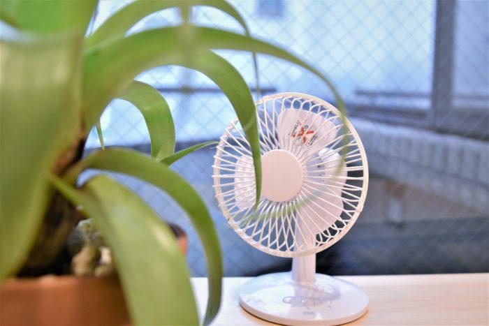 エアプランツにとって日光と同じくらい重要なのが風通しです。  風通しが悪いとエアプランツが蒸れてしまうことがあります。  特に水やり後は風が非常に重要になってくるため、小さい扇風機やサーキュレーターを回すようにすると良いでしょう。  ただし、気温が低く葉が濡れている状態のときに風を当ててしまうと、葉が傷んでしまうことがあるので注意が必要です。