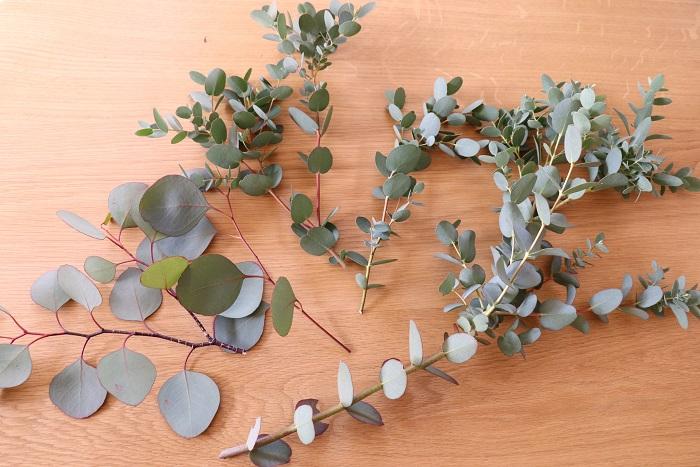 常緑樹と一緒に、ユーカリの枝を混ぜてリースを作っても素敵ですよ。