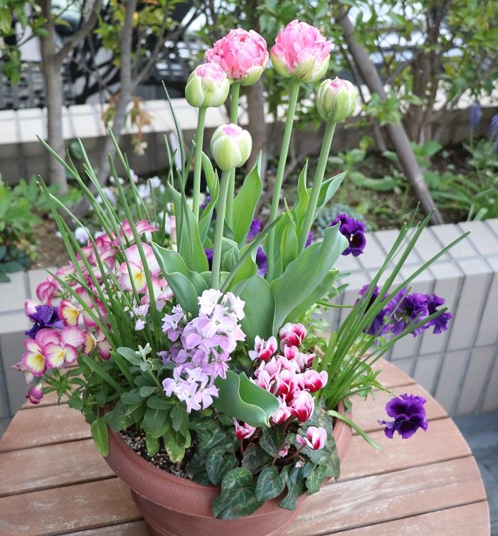 寒い冬を乗り越え、春を感じ取った球根がムクムクと動き出し、次々と咲く姿は本当に美しく、ものすごい生命力を感じます。  春に、球根が咲いて大成功したトリプルデッカーの寄せ植えの姿を見ると、「秋に球根をしのばせておいて良かった♪」と、毎年思います。今年も大成功でした!