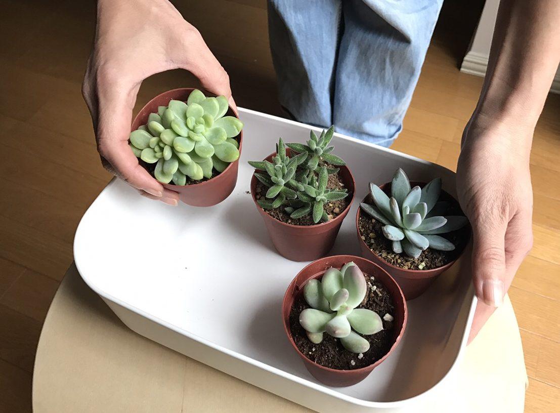 寒い冬の季節は、室内に取り込んでお気に入りの植物を眺めてみてはいかがでしょうか。もっとたくさんの植物を育てている方は、棚にこのケースをずらーと並べてみたらよりおしゃれな空間になりそうですね。