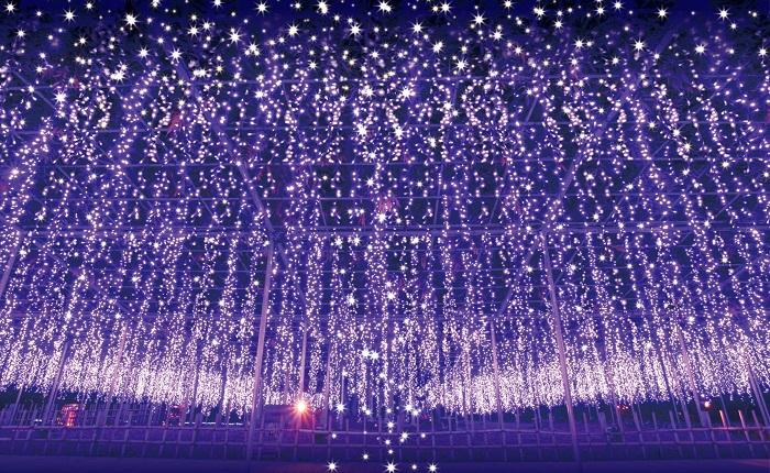 昨年の350万球から今年は400万球にスケールアップの「光の花の庭」。日本夜景遺産「関東三大イルミネーション」にも認定登録されました。昨年は全国4,800名の夜景鑑賞士が選んだ全国イルミネーションランキング第一位を受賞。  園全体をイルミネーションで彩る「光の花の庭フラワーファンタジー」では、様々なイルミネーションを楽しむことができます。神秘的な大藤棚をイルミネーションで再現した「奇蹟の大藤」は、風に揺らめき本物の藤棚のような見ごたえです。  また、光の花の庭のコンセプトに相応しい5,000 本の「光のバラ」、4色の藤をイメージした「光の藤」、水辺に輝く「光の睡蓮」など。