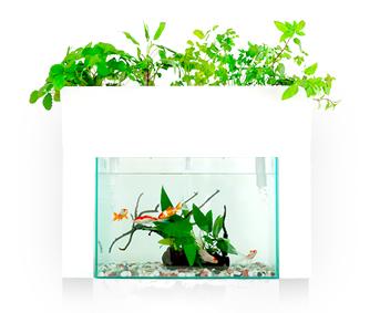 アクアスプラウトSV~さかな畑~ 地球に最もやさしい循環農業(アクアポニックス)の技術を応用した、家庭用栽培キット「アクアスプラウトSV~さかな畑~」が株式会社おうち菜園から登場。  アクアスプラウトSVは、下部の水槽で魚を飼育するだけで、上部の小さな畑でオーガニック野菜やハーブが育つ家庭でも楽しめるアクアポニックスキット。