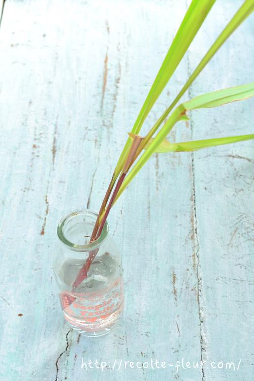 レモングラスティ―はフレッシュな状態から作るのと、天日干ししたものと少し味が変わりますので、もしフレッシュの香りを楽しみたいときは収穫したレモングラスを水に挿して飲みたいときにレモングラスティ―を入れるのも、おすすめです。