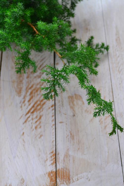 エバーグリーンとは、1年中、葉を落とさない常緑樹のことです。