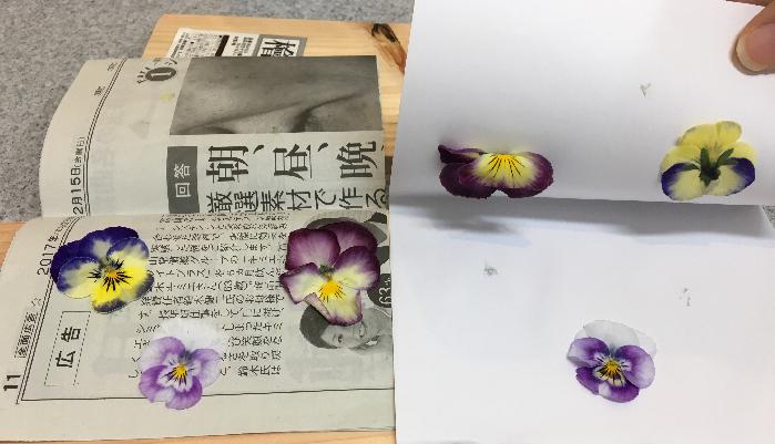 6時間経過後  比べてみると新聞紙はしっかりと水分を除湿しているのに対し、コピー用紙の方は水分が多く、くっついてしまいます。