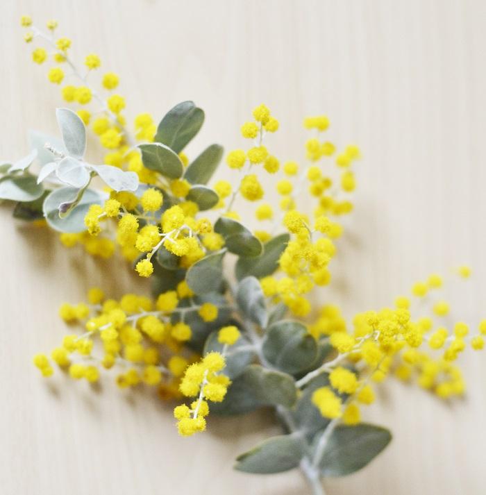 「ミモザ(アカシア)」の花言葉は「優雅」「友情」。  オレンジ色のミモザの花言葉は「エレガント」。  黄色のミモザの花言葉は「秘密の恋」。