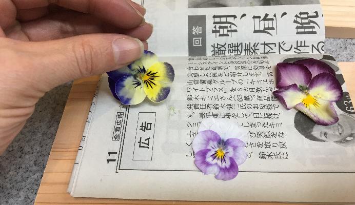 新聞紙の押し花は、さらりとしています。一目瞭然ですね。