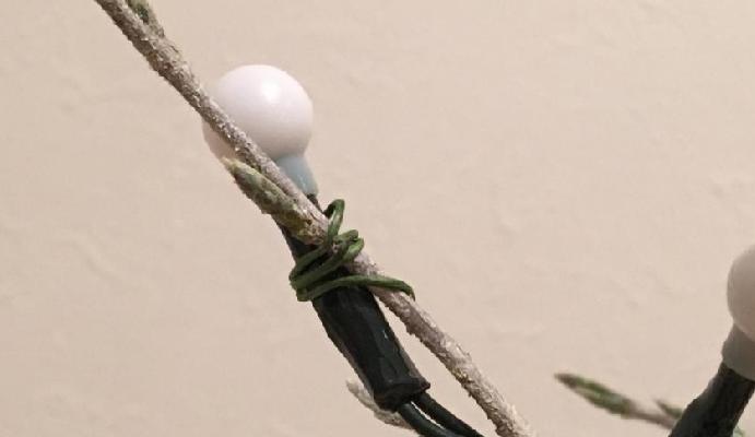 6 枝にイルミネーションライトの電球を1つずつ括り付けます。