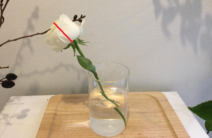 水を吸わせて新聞紙で固定して1時間後、くたっとうなだれていた花の頭が上に持ち上がったのが分かります。何だか新聞紙は、花にとって骨折の時に用いるギプスみたいですね。