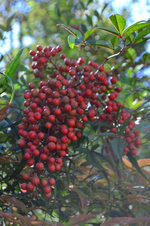 お庭でとれる実だとピラカンサや南天の実など小さめな実ものが適しています。花屋さんで手に入るものだとサンキライや沖縄スズメウリもかわいいですよ。