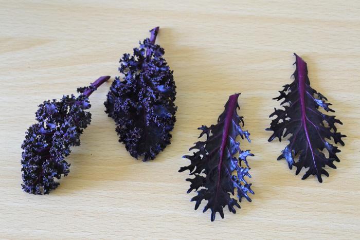 最近の葉牡丹(ハボタン)はこんな素敵な色やフォルムもあります。  こちらは花のような葉ボタンとは別のケールの系統の葉牡丹(ハボタン)の葉です。