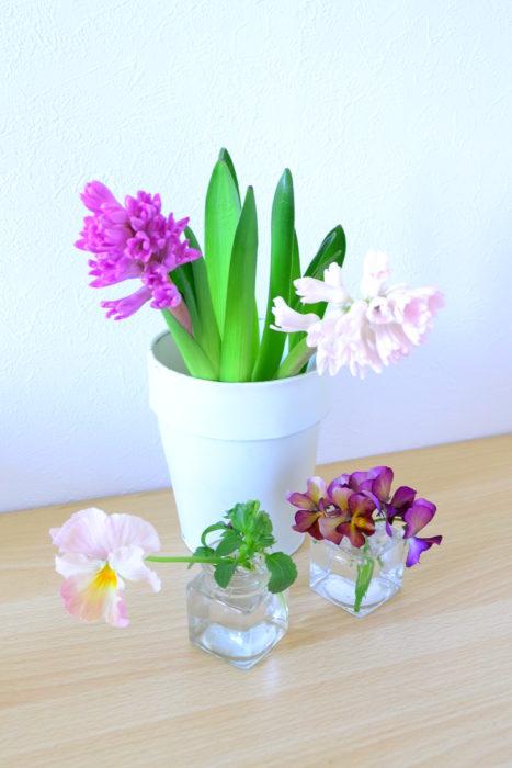 育てたビオラと一緒に。茎の短いビオラとヒヤシンスを同じ花瓶にアレンジすると、ヒヤシンスの茎を大幅に剪定しなければなりません。ヒヤシンスは、最初から茎を切らない方が長持ちするので、買ったばかりはまずはそれぞれの丈にあった花瓶に生けて複数の花瓶をまとめて飾ると、少ない本数でも華やかに見えます。