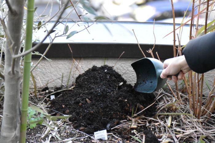防寒のために、苗の上から腐葉土やワラなどをかけてマルチングをします。