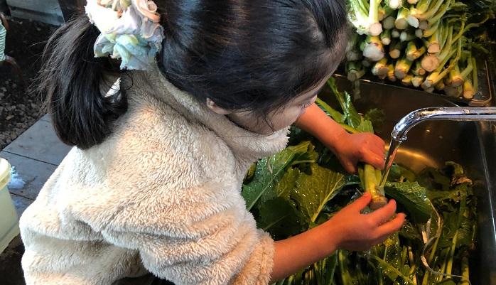 ①お菜洗いをします  信州では、野沢菜のことは「お菜」と呼びます。また、収穫した野沢菜を洗うことをお菜洗いと呼びます。一冬分のお菜を収穫し、一気に洗って漬けるお菜洗いとお菜漬けは信州の風物詩ともいえます。野沢菜漬け発祥の野沢など一部地域では、温泉で野沢菜を洗う風習があります。温泉で洗うことで野沢菜が柔らかくなるんだそうです。温泉浴場を開放して一斉にお菜洗いをするところもあるんだとか。  ②お湯をためながら手で泥を落としていきます。(今回はお湯で洗わせていただきました。)  ③塩を準備して、お酒で漬物樽をお清めします。