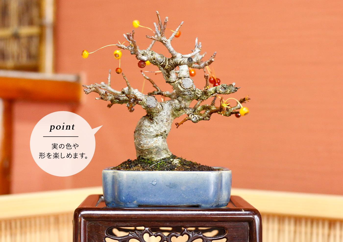 <雑木盆栽>実物