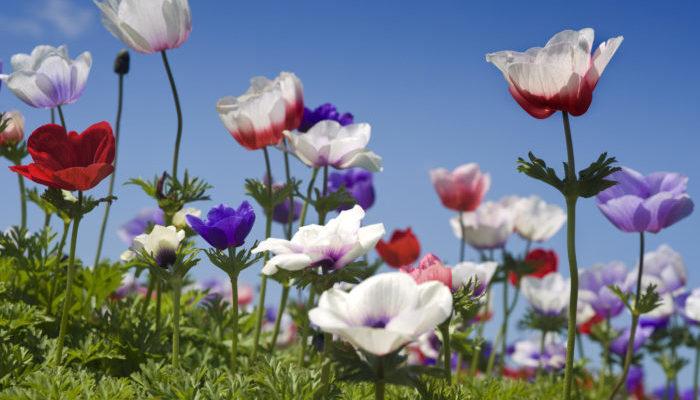 春に咲く!代表的な春の花20選  ...
