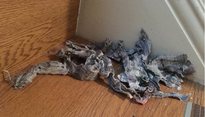 掃除したい場所に、新聞紙を水分を含ませしっかり絞ったものをちぎります。
