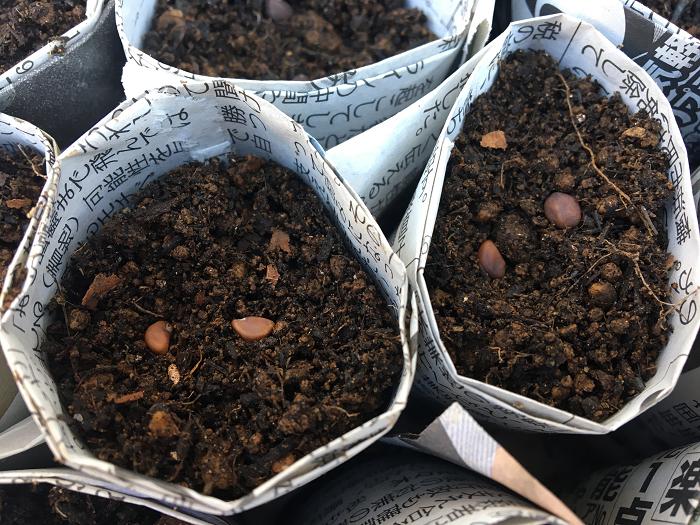 7. 後はお好みの種をまいて、最後に土をかけて、水をやり、芽が出るのを楽しみに待ちましょう。