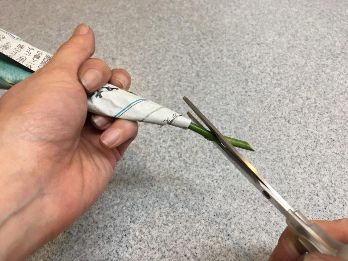 4. 花の切り口をハサミでもう一度切ります。