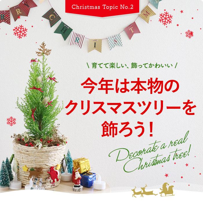 育てて楽しい、飾ってかわいい今年は本物のクリスマスツリーを飾ろう