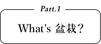 What's盆栽?