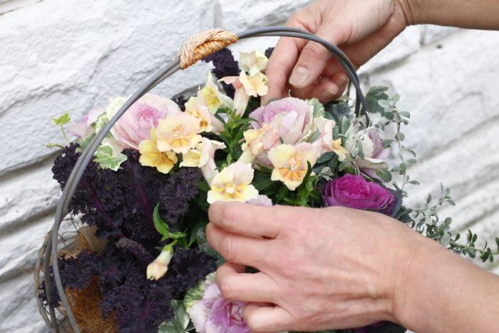 キンギョソウの花を、他の植物の葉と葉の間からまんべんなく見えるように整えます。 土で汚れないよう、手袋を外して綺麗な手で行うことがポイントです。 花が傷みやすいので優しく触れましょう。
