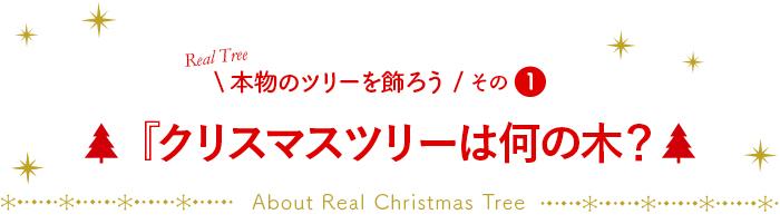 『クリスマスツリーは何の木?