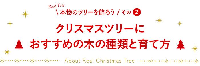 クリスマスツリーに おすすめの木の種類と育て方