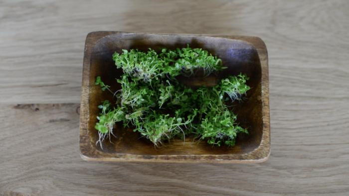 洗い終えた水草は、植えやすいように小分けにします。