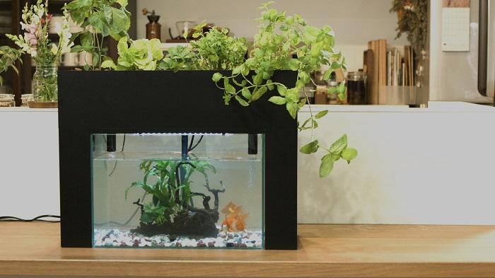 2. お手入れが楽 植物の水やり・肥料・草取りは不要です。 植物が水をキレイにするため、定期的な水換えもありません。主なメンテナンスは魚へのエサやりと、蒸発して減った水を約2週間に1回足す程度。お手入れが楽なところもいいところのひとつ。