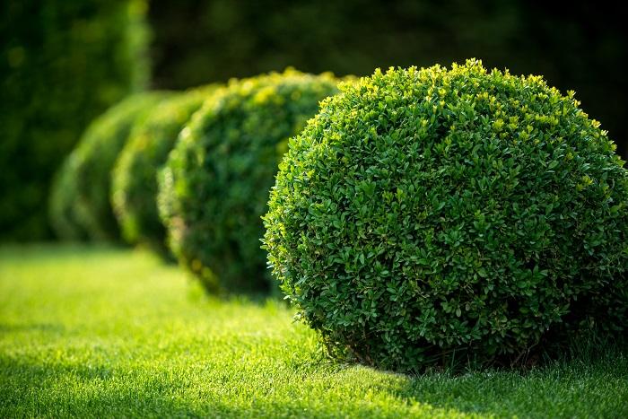 生垣とは、簡単に説明すると「植物で作る垣根」のことを指す言葉です。隣家との境目や道路との境界線など、敷地の内側と外側を隔てる役割をしています。  では垣根とはなんでしょう。垣根とは「敷地を隔てる境界線」です。これは、ブロック塀であったり、鉄製フェンスであったり、竹で組んだ垣根であったり、植物による生垣であったりします。つまり生垣とは垣根のなかの一種類ということになります。  目的は境界線とはいえせっかくの自宅を取り囲むものですから、優しさと柔らかさのある植物で作りたいですよね。さらに言えば、出来ればちょっと可愛い植栽にして、他のお家に差を付けたくもあります。ここではそんなおしゃれな生垣におすすめの植物をご紹介します。