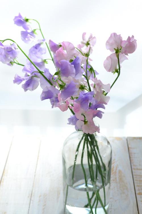 切り花のスイートピーのほとんどは、葉っぱがない茎だけで流通しています。 他の花や葉っぱがなく、スイートピー一種だけで生ける時は、口の細めの花瓶の方が生けやすいでしょう。