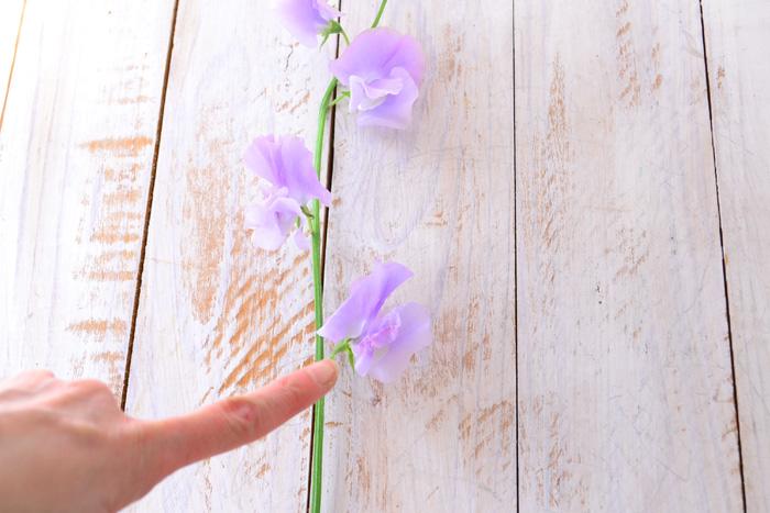 スイートピーは、1本の花が下から徐々に開花してきます。