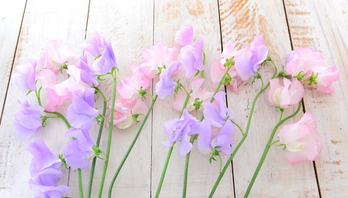 春の甘い香り!スイートピーの生け方のコツ | LOVEGREEN(ラブグリーン)