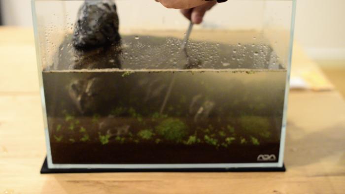 水を入れて植えた方が水草を植えやすいです。