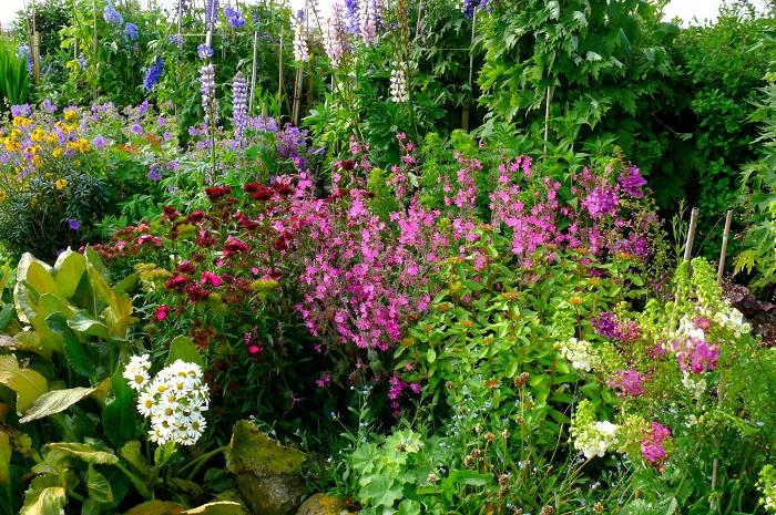 1年を通して庭を彩るよう、様々な種類の花(宿根草・球根・1年草)を植えてみましょう。ボーダーガーデンの手前には華やかな種類の1、2年草(キンギョソウやパンジー、ビオラ、ストック、カンパニュラなど)を。その後ろにはチューリップやガーベラ、アリウム、クリスマスローズといった球根や宿根草を植えます。一番高い場所に植える代表的な植物には、デルフィニウムやルピナスやコニファーといったものがあります。日陰にはギボウシのような存在感のある葉っぱを植えておくと、庭の景観をぐっと引き締めてくれます。  しかしジキタリスやデルフィニウムなどのイギリスの花は日本の夏に耐えられないものも多いので、ワレモコウやツバキ、ボタン、山野草など日本の植物を植えてみても意外と似合うものです。