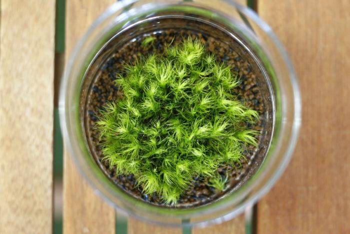 一面に植え付けずに瓶と苔の間に1cmほど余白を開ける。