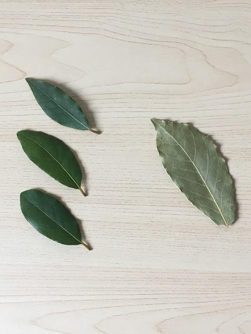 左・収穫したての月桂樹(ローリエ) 右・ドライの月桂樹(ローリエ)