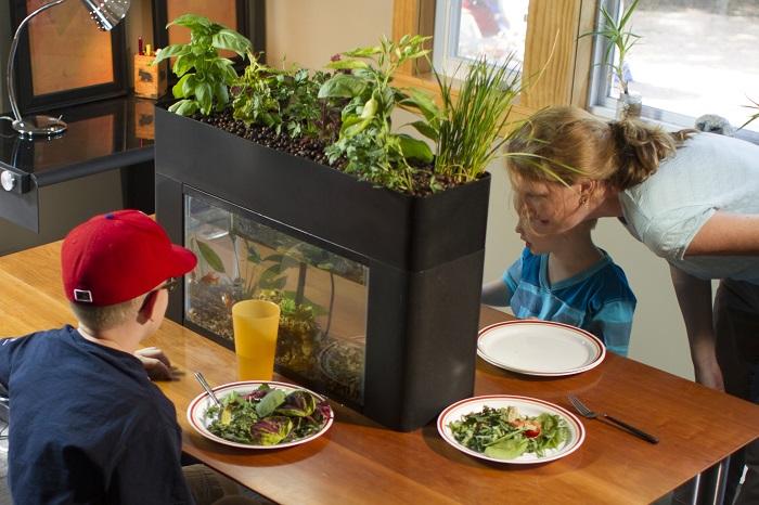 お部屋の中で魚も植物も育てられる空間はウキウキしますね。