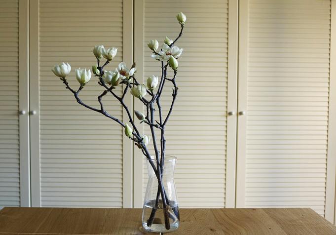 リビングの目立つところや玄関などに飾ると、季節感を楽しめるのでおすすめです。あたたかい部屋に置くと開花が早まるので、寒いところで管理すれば比較的長く楽しめると思います。また、花が開くとぽろぽろと落ちやすいのでそれも頭に入れて飾る場所を決めましょう。