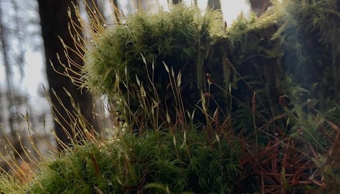 山で暮らすようになってから、東京にいた時よりも植物を眺める時間が増えました。 眺めることで見えてくるものがたくさんあることを、教えてもらっています。