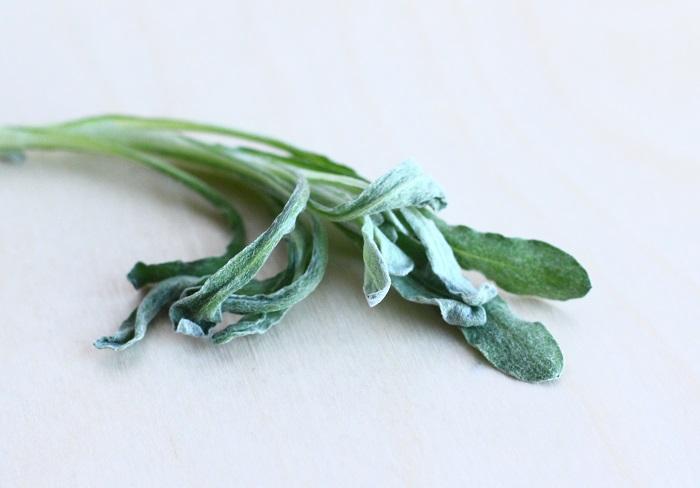 ごぎょう ハハコグサ(母子草)学名: Gnaphalium affine  オギョウともゴギョウとも呼ぶこの草はハハコグサのことで、冬はロゼッタ状に葉が伸びます。春に成長すると20~30㎝になり、黄色く丸みのある花をつけます。葉はうっすら起毛していて、さわり午後地がとても良いです。シルバーリーフのように見えます。