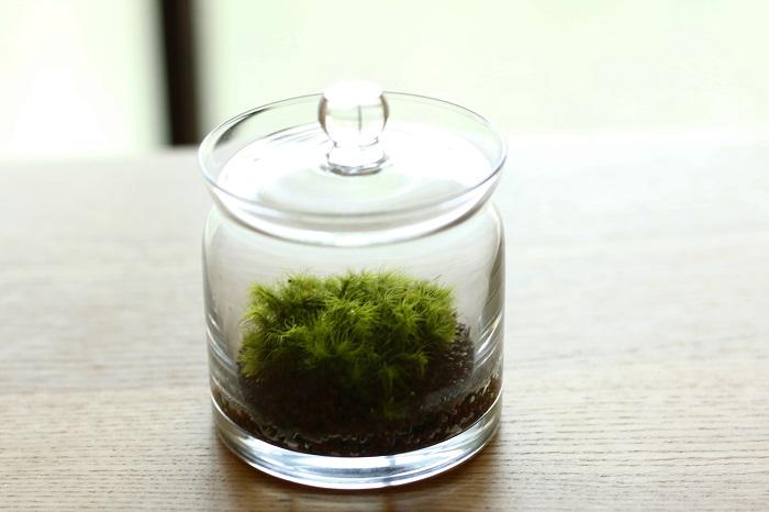 苔って聞くと、ジメジメしていて暗く日陰のイメージだったり、庭や鉢植えの表面からアスファルトの隙間など、どこにでも生えているイメージだったり。でも、実は種類も非常に多く、日本に自生している種類だけでも1,700種あるとされています。  苔テラリウムは日当たりが悪い場所でも育てることができ、場所も取らないのも良いところ。水やりも毎日ではないので手間もさほどかからないので忙しい人にもおすすめです。