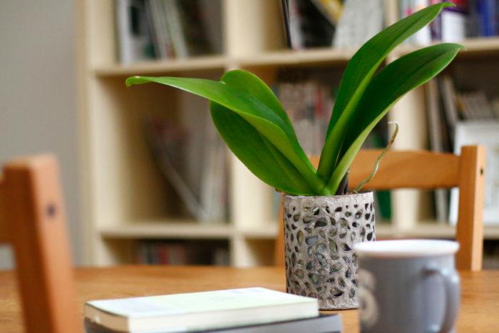 花だけでなく、葉にも注目。鉢を変えてリビングに飾って楽しめます。