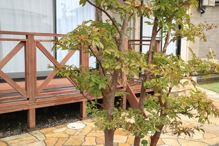 ウッドデッキとは、庭に面した室内との続きに敷かれた木製の甲板のことを言います。もともとデッキとは船の甲板の意味があり、床下の構造をもち、屋根のない場所のことを指すようです。屋外にいながら、椅子やテーブルをおいてプライベート空間が楽しめることもあって人気を集めています。庭と住まいの中間のようなイメージで、気軽にコンテナガーデンを楽しんだり、子供たちの遊び場になったりと使い方は様々で、遊び心を感じさせてくれるエクステリアです。また、戸建てに限らず、最近ではマンションのバルコニーなどに設置するウッドデッキパネルなども種類が豊富で、自然味あふれる空間を作りだすことができます。