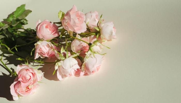 淡い桃色が愛らしいスプレーバラのブリトニー。お花全体が丸いフォルムで、横から見るとカップのようにかわいらしい形をしています。