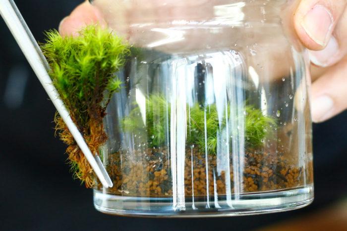 ⑤苔下部が長い場合も下部を切って高さを合わせる。