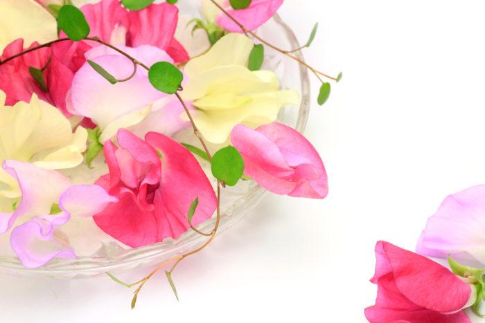 地中海沿岸が原産地のお花スイトピー。マメ科のお花で、切り花としてお花屋さんでよく見かけるお花ですね。英語名は「sweet pea(香りの良いえんどう豆の意)」、和名では「麝香豌豆(ジャコウエンドウ)」と呼ばれ、その名前が物語っているように、甘い香りで周囲を満たしてくれるお花です。