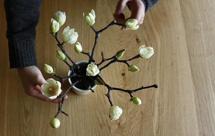 白木蓮(ハクモクレン)は空を見上げるように上向きで咲く樹木なので、上から見たときにきれい見えるよう組み合わせました。